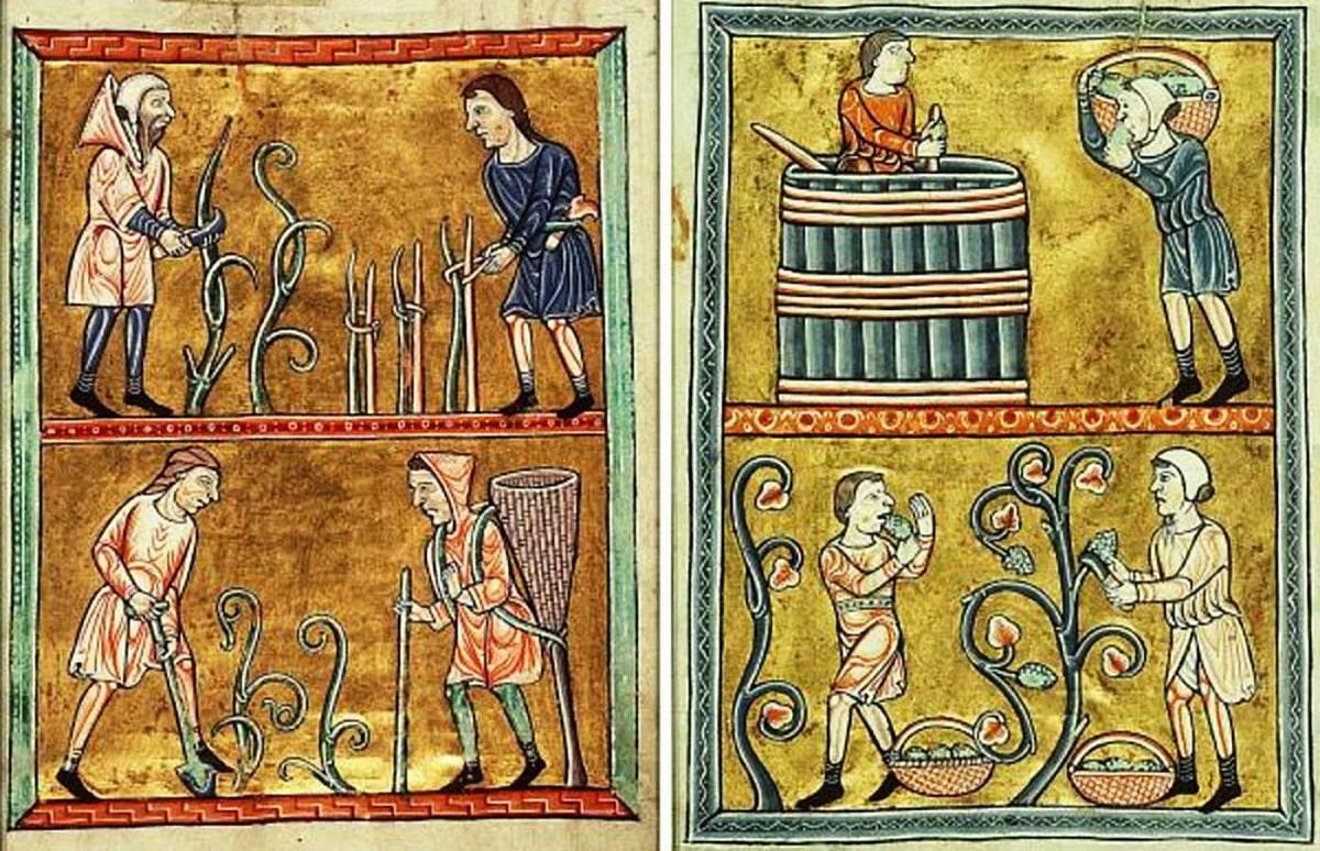L'amarone della valporicella: un vino tutto italiano tipico del veronese